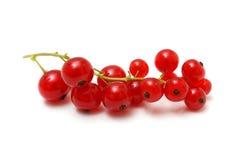 Rote Johannisbeeren auf Weiß Stockfotografie