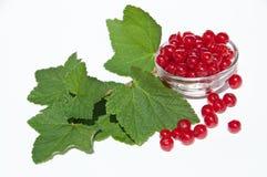 Rote Johannisbeeren mit Blättern Lizenzfreie Stockfotografie