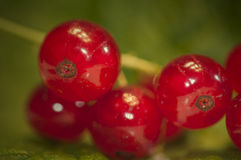 Rote Johannisbeeren - Stachelbeere Stockfotografie