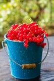 Rote Johannisbeerfruchteimer-Sommerregen lässt das hölzerne Wasser fallen Stockbilder