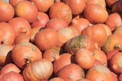 Rote Kürbise, Herbsthintergrund für Halloween und Danksagung Stockfotografie