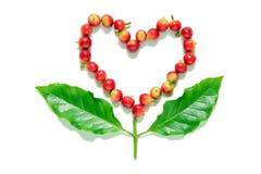 Rote Kaffeebohnebeeren im Herzen formen mit Kaffeeblatt Stockbild