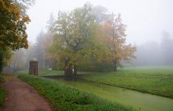 Rote Kaskade und nebeliger Herbstmorgen Stockbild
