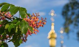 Rote Kastanienblume auf einem Hintergrund der Kirche Stockfoto