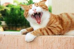 Rote Katze Lizenzfreie Stockbilder