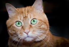 Rote Katze. Stockfoto