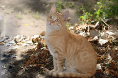 Rote Katze Lizenzfreies Stockfoto