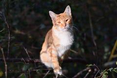 Rote Katze auf Baum Stockfotos