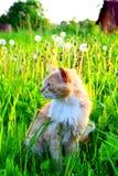 Rote Katze auf dem Rasen Lizenzfreies Stockfoto