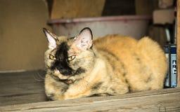 Rote Katze auf der Türstufe eines Holzhauses an der Tür Lizenzfreie Stockfotos