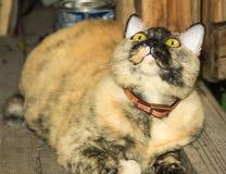 Rote Katze auf der Türstufe eines Holzhauses an der Tür Stockfotos