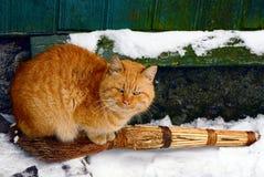 Rote Katze auf einem Besen im Schnee Lizenzfreie Stockfotografie