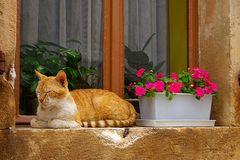 Rote Katze auf einem Fensterrahmen Lizenzfreies Stockfoto