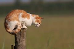 Rote Katze auf einem Pol Stockfotos
