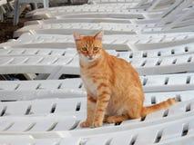 Rote Katze auf einem weißen Aufenthaltsraum stockfotos