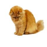 Rote Katze auf einem weißen Hintergrund Stockbilder