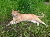 Rote Katze bei Baalam Stockbilder