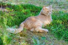 Rote Katze, die auf dem Gras liegt Lizenzfreie Stockfotografie