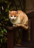 Rote Katze, die auf der Bank im Park sitzt Stockbild