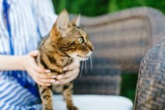 Rote Katze, die auf der Couch im Haus liegt lizenzfreie stockbilder