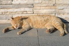 Rote Katze, die auf der Straße auf der Steinpflasterung schläft Stockfotografie