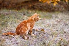 Rote Katze, die auf der Straße im Gras sitzt lizenzfreies stockbild