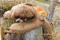 Rote Katze, die auf einem Teddybären schläft Lizenzfreie Stockbilder