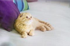 Rote Katze, die auf einem Trainer sich wäscht Stockfoto