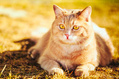 Rote Katze, die auf grünem Frühlingsgras sitzt Stockbilder
