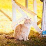 Rote Katze, die auf grünem Frühlingsgras sitzt Lizenzfreies Stockbild