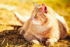 Rote Katze, die auf grünem Frühlingsgras sitzt Lizenzfreie Stockfotos