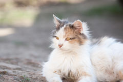 Rote Katze, die aus den Grund liegt Stockfotos