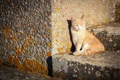 Rote Katze, die in der Sonne sich aalt Stockbild
