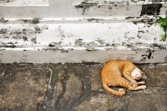 Rote Katze, die in der Straße schläft Lizenzfreies Stockbild