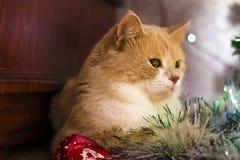 Rote Katze, die unter dem Baum auf neuem Jahr liegt lizenzfreies stockfoto