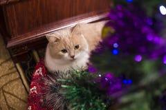 Rote Katze, die unter dem Baum auf neuem Jahr liegt stockfotos