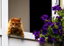 Rote Katze, die vom Balkon aufpasst Lizenzfreie Stockfotos