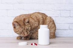 Rote Katze, die zu den Medizinkapseln neben einem offenen Tablettenfl?schchen neugierig schaut stockbilder