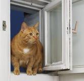 Rote Katze an einem geöffneten Fenster Lizenzfreie Stockfotos