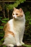 Rote Katze entspannen sich Stockbild