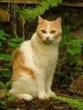 Rote Katze entspannen sich Lizenzfreies Stockfoto