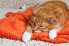 Rote Katze fiel krank lizenzfreie stockfotografie