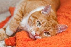 Rote Katze fiel krank Stockbild