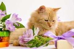 Rote Katze im Badezimmerzubehör, nahe handgemachter Seife, luven, als Stockfoto