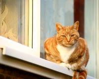 Rote Katze im Fenster stockfoto
