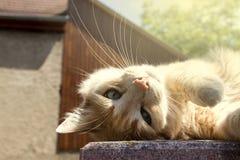Rote Katze im Sonnenlicht stockfoto