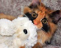 Rote Katze mit dem weißen Bären Lizenzfreie Stockfotografie