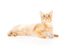 Rote Katze mit einer Kugel des Garns Stockfotografie