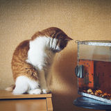 Rote Katze nahe Aquarium zu Hause Wunsch erwartend Lizenzfreies Stockfoto
