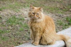 Rote Katze sitzt auf einem Klotz Lizenzfreie Stockfotografie